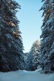 Camino de la montaña Nevado en bosque soleado del invierno Foto de archivo libre de regalías