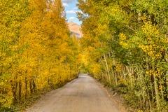 Camino de la montaña de la suciedad y de la grava flanqueado por las hojas amarillas y de oro del álamo temblón imagen de archivo libre de regalías