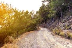 Camino de la montaña a través de pinos Turquía, Kemer Imagen de archivo