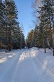 Camino de la nieve del bosque del invierno Fotos de archivo