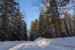 Camino de la nieve del bosque del invierno Imágenes de archivo libres de regalías