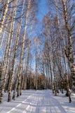 Camino de la nieve del bosque del invierno del abedul Imagen de archivo libre de regalías
