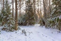 Camino de la nieve en bosque del invierno Fotografía de archivo