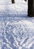 Camino de la nieve en el parque Foto de archivo