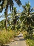 Camino de la palma Imagen de archivo libre de regalías