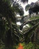 Camino de la palma de la arcilla roja imagenes de archivo