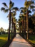 Camino de la palmera foto de archivo libre de regalías