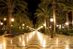 Camino de la palmera en la noche Imagen de archivo