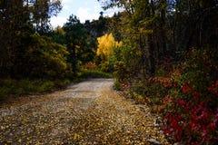 Camino de la parte posterior de Colorado en otoño Fotos de archivo