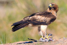 Camino de la presa de Eagle Fotos de archivo libres de regalías