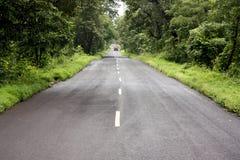 Camino de la selva Fotografía de archivo libre de regalías