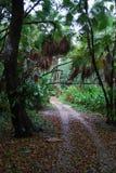 Camino de la selva Fotos de archivo libres de regalías