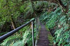 Camino de la selva tropical Imagenes de archivo