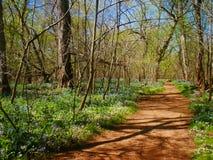 Camino de la suciedad de Brown en las maderas Foto de archivo libre de regalías