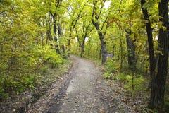 Camino de la suciedad en bosque Fotografía de archivo libre de regalías