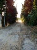 Camino de la tarde Foto de archivo