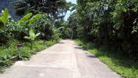 Camino de la tierra con el encintado blanco y polos rojos en los árboles verdes metrajes