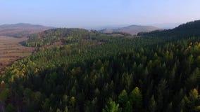 Camino de la visión aérea en el bosque conífero en el lago Baikal, Buriatia, Rusia almacen de video