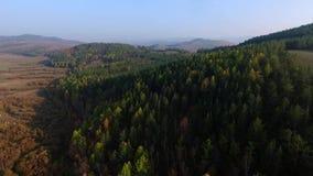 Camino de la visión aérea en el bosque conífero en el lago Baikal, Buriatia, Rusia metrajes