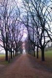 Camino de los árboles foto de archivo libre de regalías
