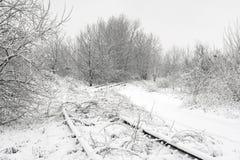 Camino de los árboles del invierno Imagen de archivo