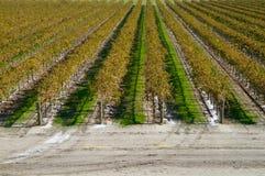 Camino de los viñedos del otoño Fotos de archivo libres de regalías