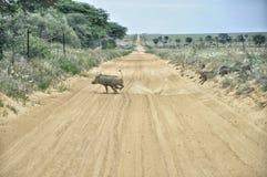 Camino de los viajeros de Kalahari Fotos de archivo libres de regalías
