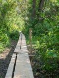 Camino de madera Fotos de archivo libres de regalías
