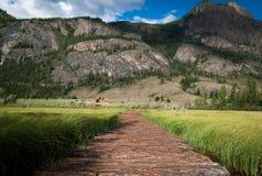 Camino de madera al lago Altai Geyzerovy fotos de archivo