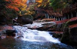 Camino de madera con las hojas rojas Imagen de archivo libre de regalías