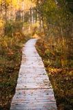 Camino de madera de la manera de la trayectoria del embarque en bosque del otoño Foto de archivo