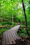 Camino de madera en bosque Foto de archivo libre de regalías