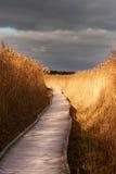 Camino de madera en cañas Foto de archivo libre de regalías