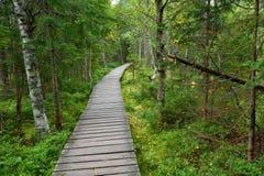 Camino de madera estrecho en el bosque Fotografía de archivo
