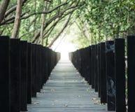 Camino de madera largo con la cubierta del bosque del mangle arriba Imagen de archivo