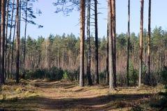 Camino de madera a través de la madera. Foto de archivo libre de regalías