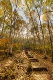 Camino de maderas Foto de archivo libre de regalías