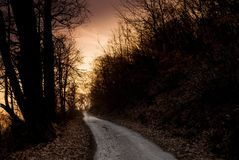 Camino de maderas en la puesta del sol Fotos de archivo libres de regalías