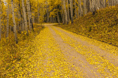Camino de oro Foto de archivo libre de regalías
