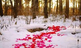 Camino de pétalos color de rosa Fotografía de archivo libre de regalías
