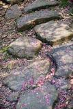 Camino de piedra con el pétalo del flor del ciruelo Imágenes de archivo libres de regalías