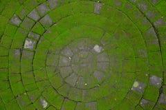 Camino de piedra cubierto con el musgo en el círculo de la forma imagen de archivo