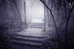 Camino de piedra mojado Fotografía de archivo libre de regalías