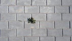 Camino de piedra urbano Imagen de archivo libre de regalías