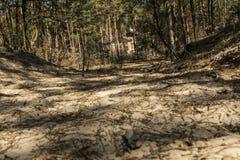 Camino de Sandy abajo en el bosque Imagen de archivo