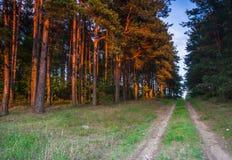 Camino de Sandy cerca del bosque Foto de archivo libre de regalías
