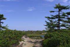 Camino de Sandy en el paisaje de la tundra del bosque Imagen de archivo libre de regalías