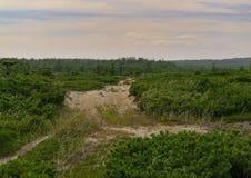 Camino de Sandy en el paisaje de la tundra del bosque Fotos de archivo