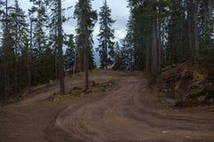 Camino de Sandy por el bosque del pino Fotos de archivo libres de regalías