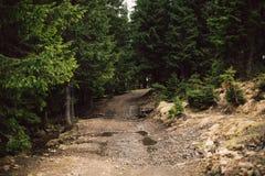Camino de Sandy por el bosque del pino Foto de archivo libre de regalías